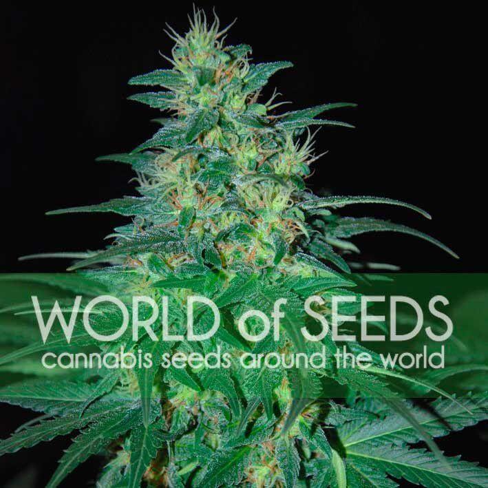 Сайт семена конопли отзывы как достать марихуаны