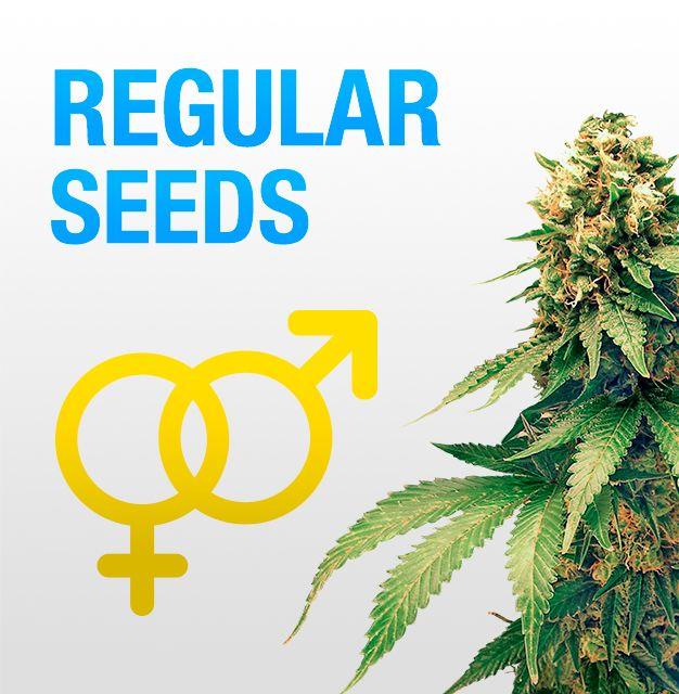 Лучшие магазины по продаже семян конопли сколько дней держится в крови марихуаны