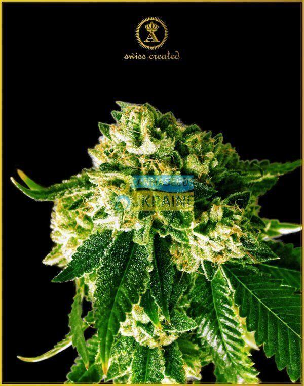 марихуана йогам