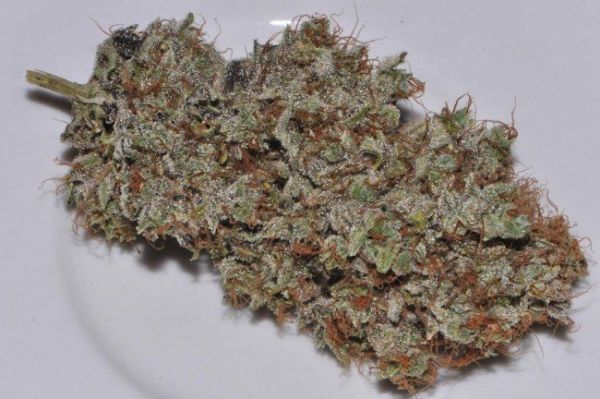 Bangi Haze feminized, ACE Seeds