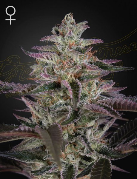 Banana Krumble Feminised, Green House Seeds