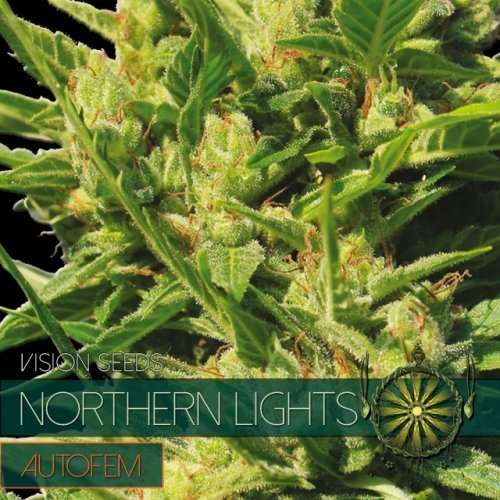 Auto Northern Lights feminized, Vision Seeds