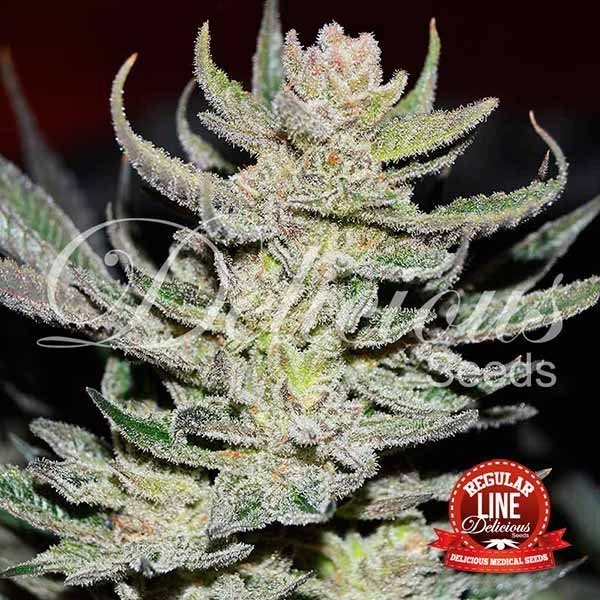 Desconocida Kush, Delicious Seeds