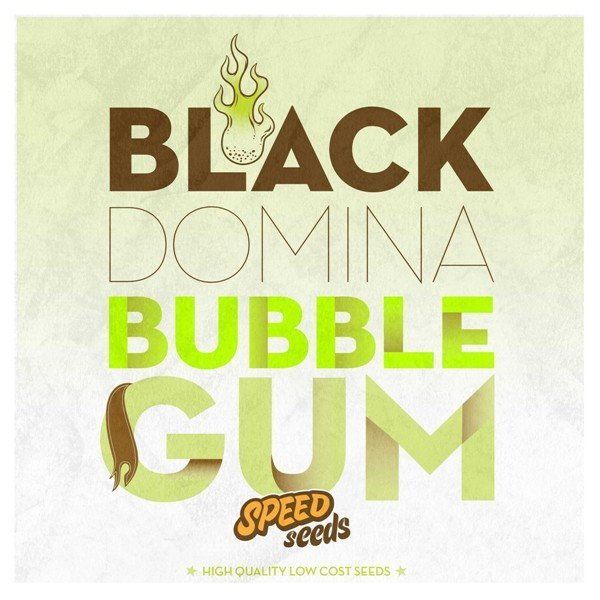 Black Domina x Bubble Gum feminized, Speed Seeds