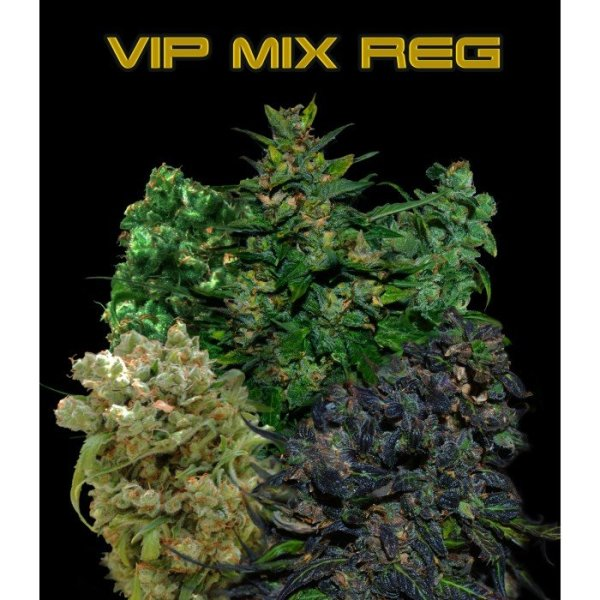 VIP Regular Mix, VIP SEEDS