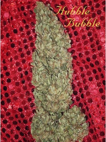 Hubble Bubble feminized, Mandala Seeds